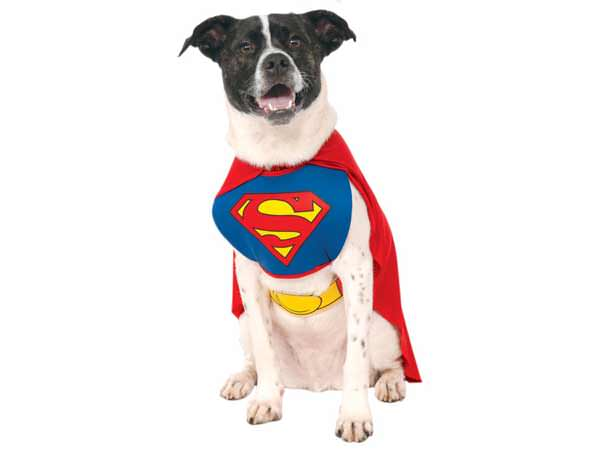 chien-deguisement-superman