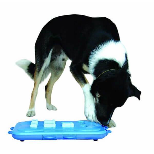 chien-joue-avec-dog-casino