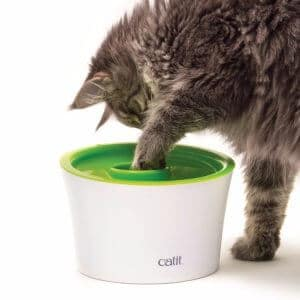 Catit-multi-feeder-chat
