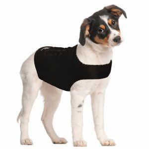 Chandail-zendog-anxiete-chien