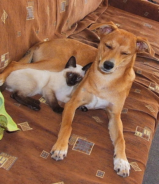 Chat et chien vie sociale