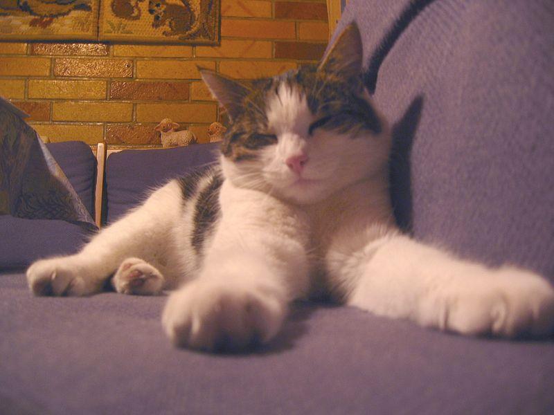 Chat qui fait ses griffes sur le divan