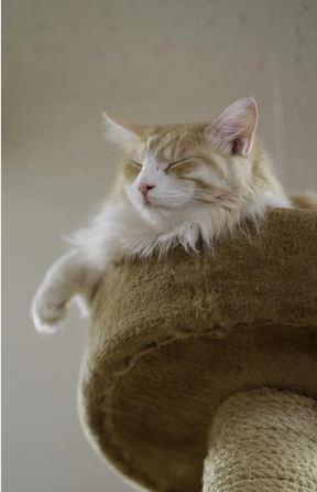 Chat sur son arbre au sommet