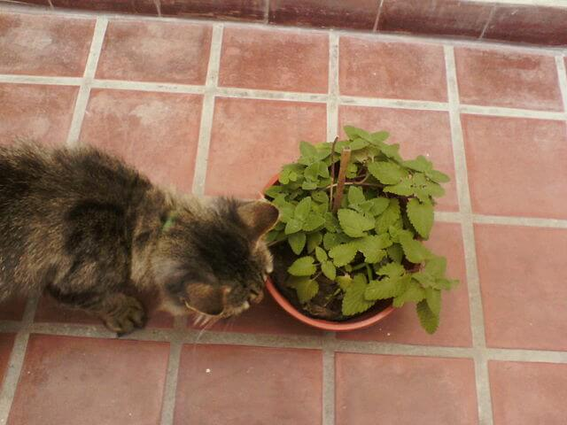 Repulsif chat plantes