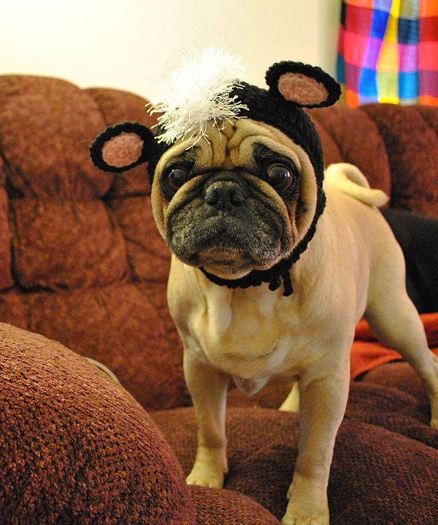 Costume chien carlin