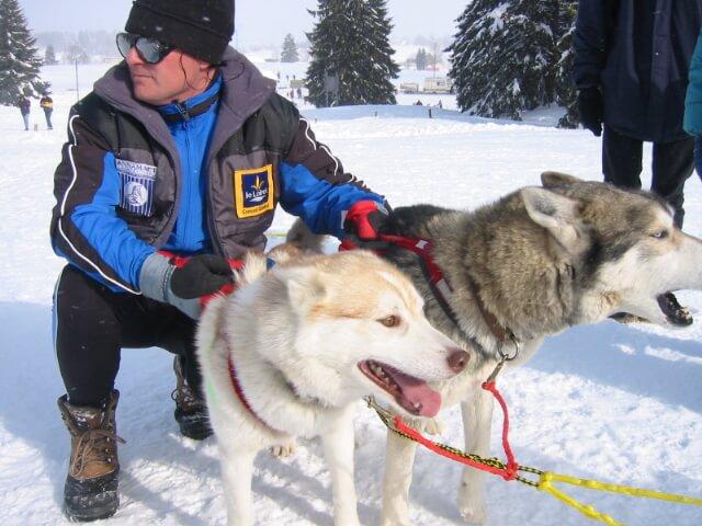 Deux chiens huskys course