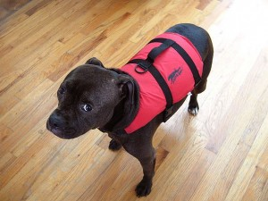 Gilet sauvetage pour chien
