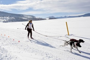 Ski joering chiens