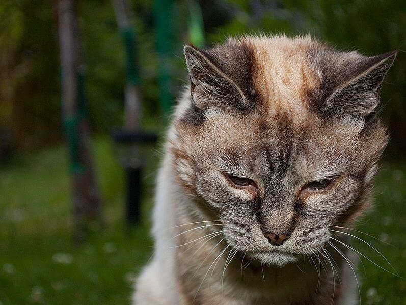 Vieux chat 20 ans