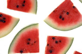Melon-d-eau-pasteque-chien