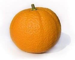 Orange pour chien