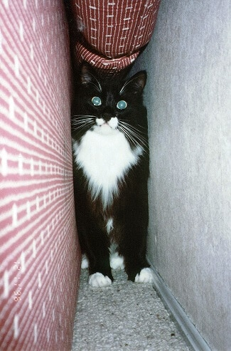 chat-cache