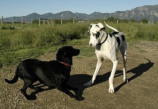 chiens-battent