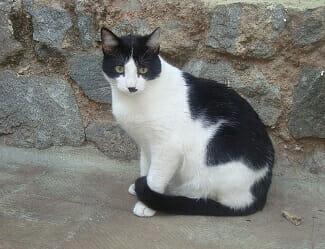 chat-diarrhée