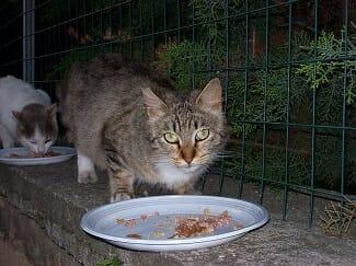 chat-mange-trop-vite