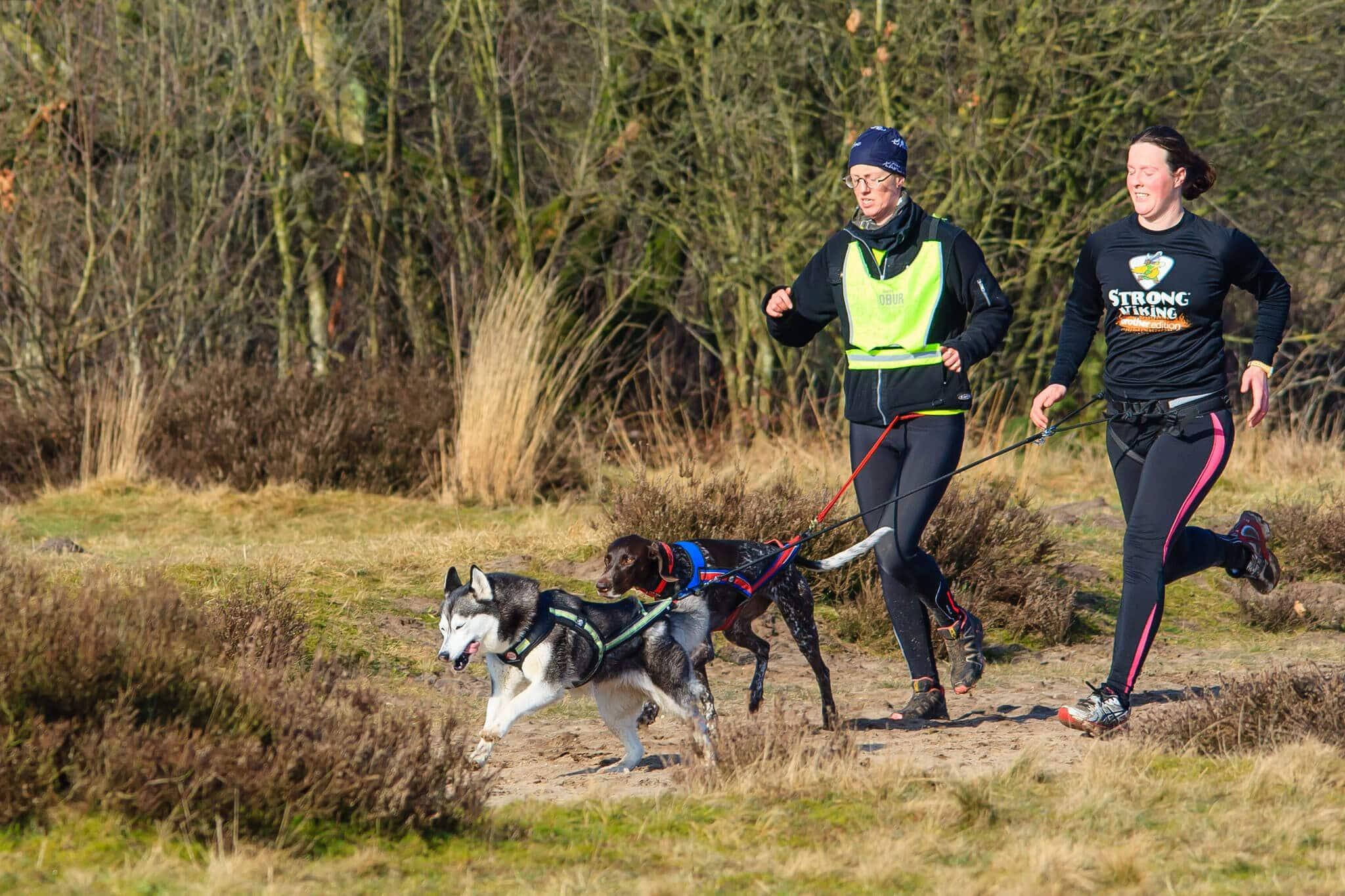 sport canin activite