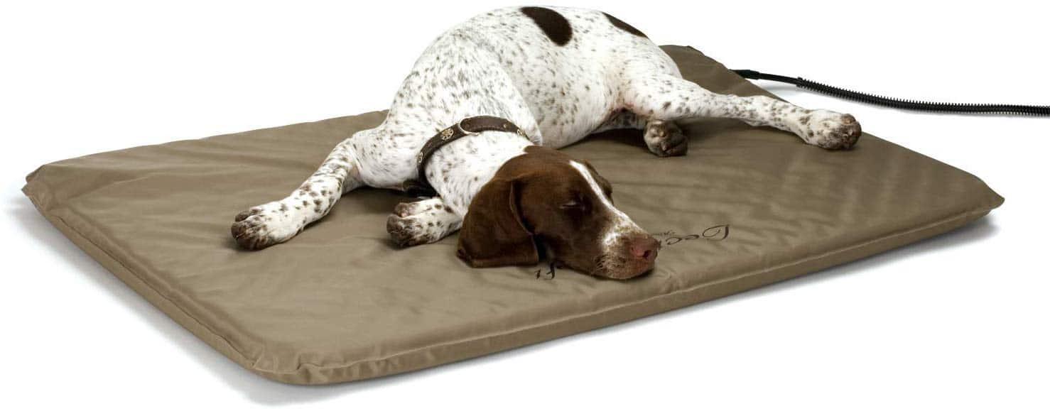 Meilleur tapis chauffant chien