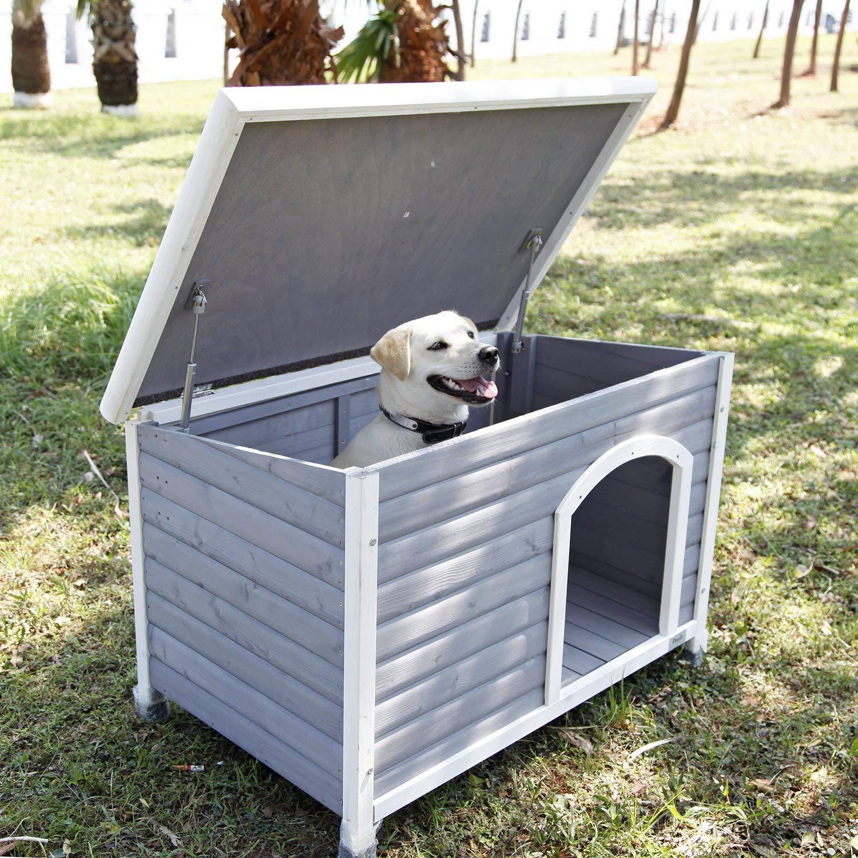 Meilleure niche cedre chien