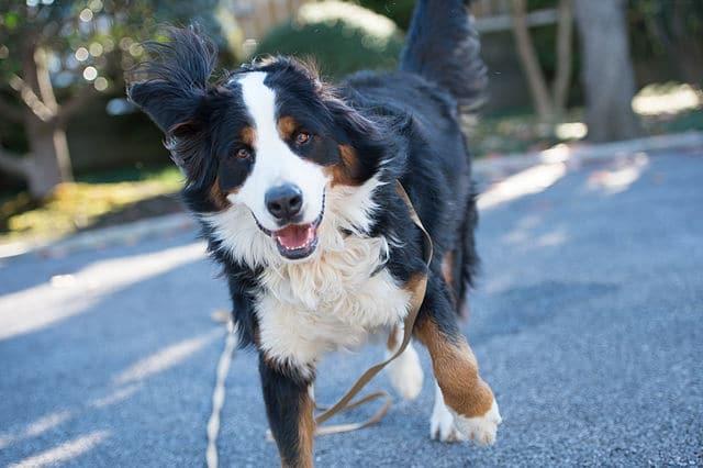 Meilleur gps chien fugue