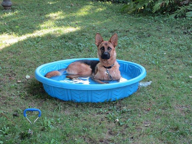 Meilleure piscine chien