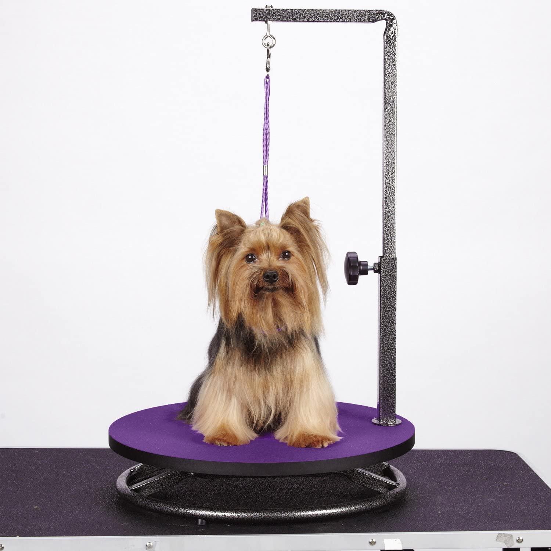 Meilleure table rotative petit chien