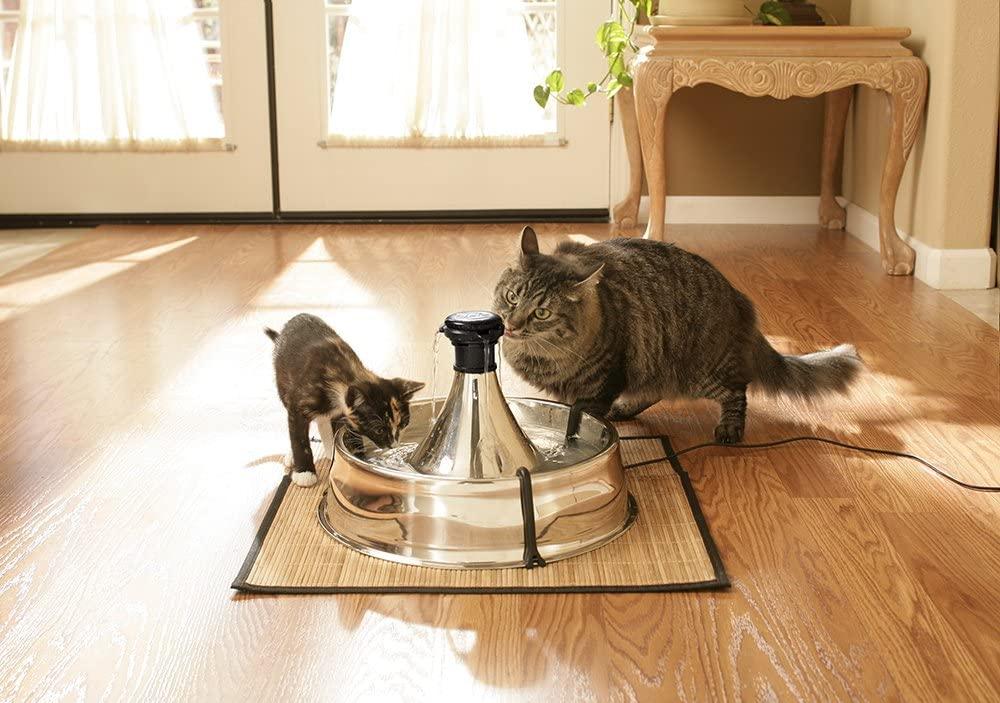 Abreuvoir eau chat acier inoxydable