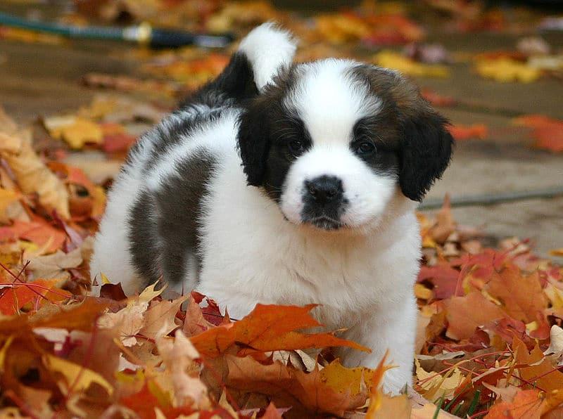 Comment choisir eleveur canin