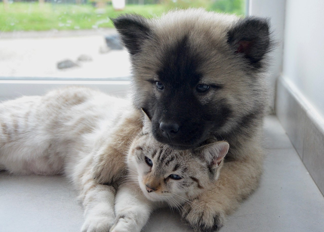 Convaincre eleveur adopter chiot chaton