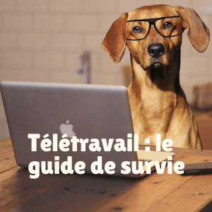 Teletravail chien guide survie