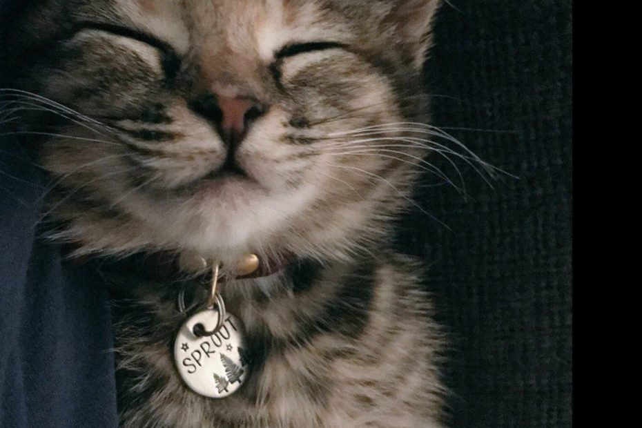 Medaille chat