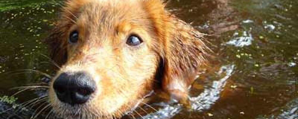 Été et canicule: comment protéger votre chien du danger